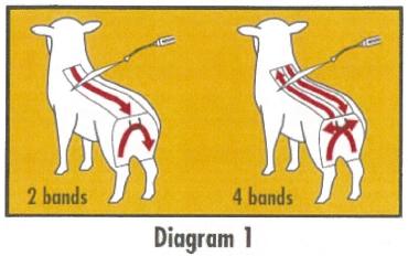 CliKZiN Diagram 1