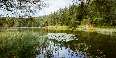 Moeserer-See-bei-Seefeld-in-Tirol © Oesterreich-Werbung Foto Karolin Pernegger