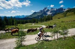Mountainbiking-bei-Filzmoos © Oesterreich-Werbung Fotograf Leo Himsl