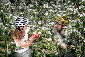Radfahren mit Frühlingsgefühlen: zwischen Apfelblüten auf der Weinland Steiermark Radtour nahe Puch. Oststeiermark © Steiermark Tourismus / Tom Lamm
