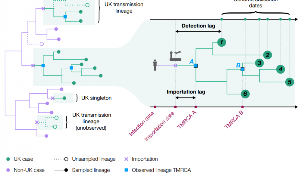 The transmission linear chart. The virus was introduced to the UK well over a thousand times in early 2020. This study shows it is possible to trace individual virus transmission lineages accurately through time and space.