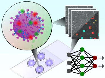 The test uses a convolutional neural network to classify microscopy images of single intact particles of different viruses Credit: University of Oxford