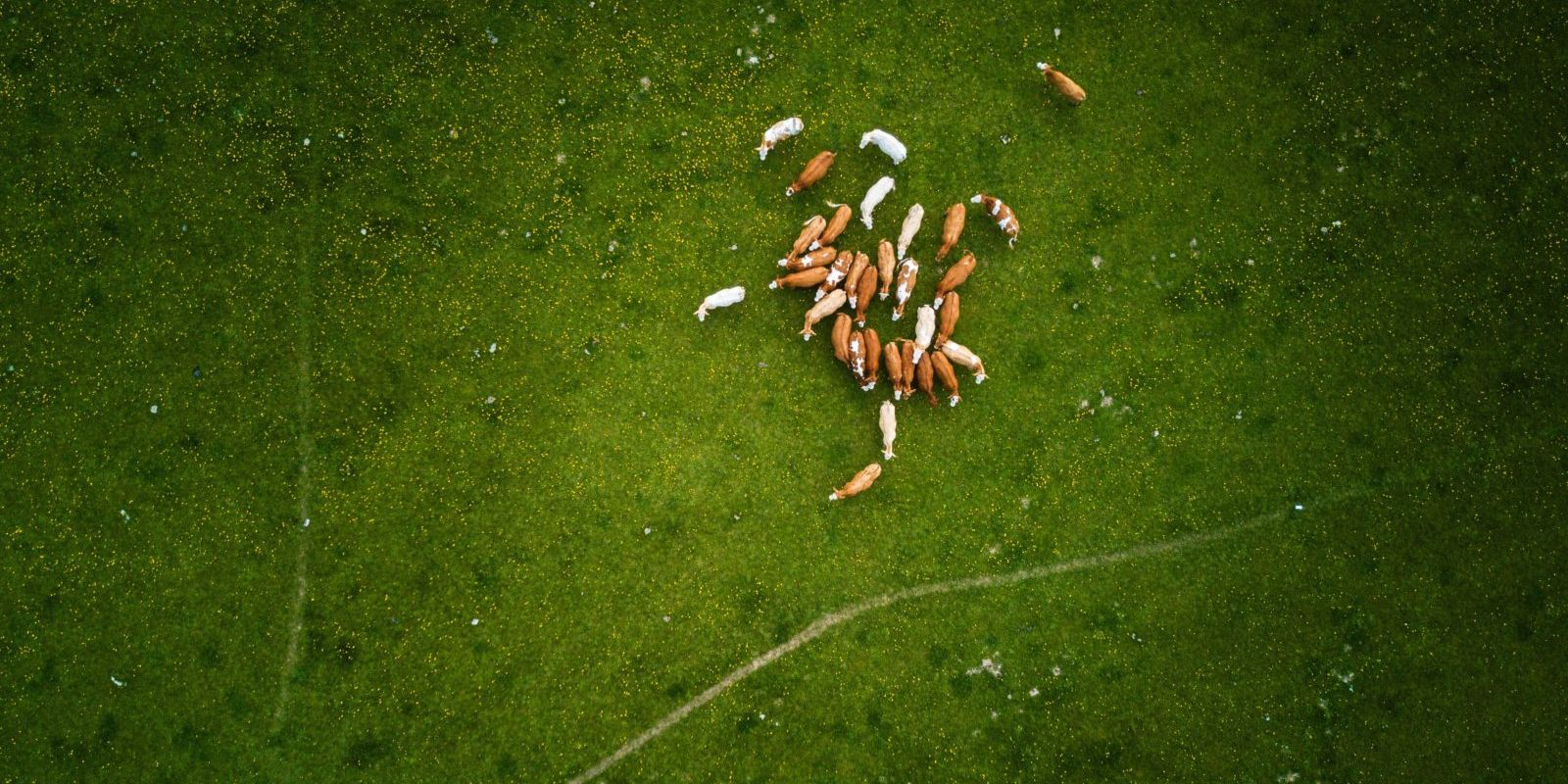 animal-nutrition-aerial-shot
