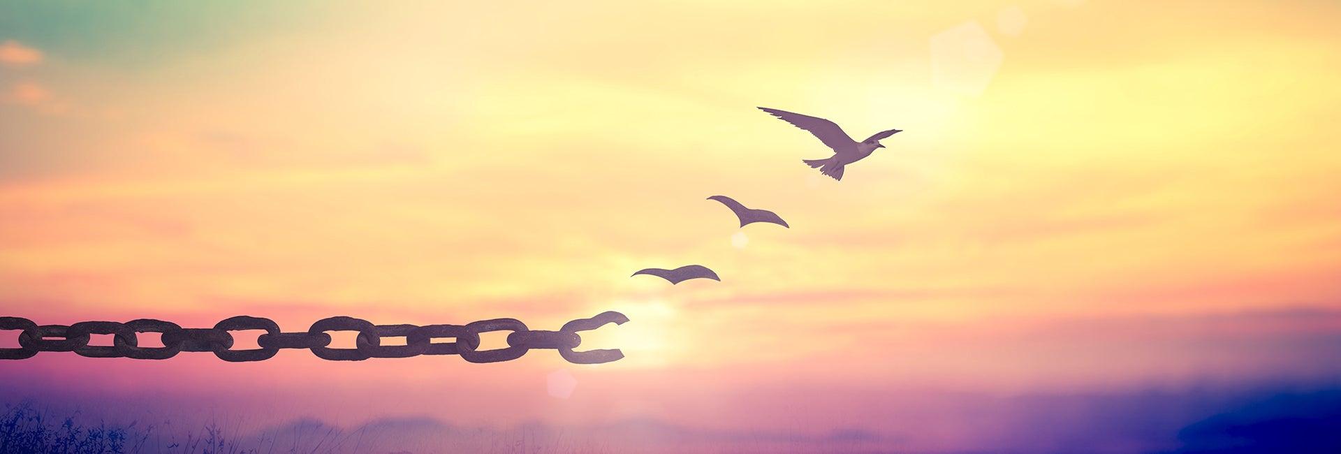 Aus einer Kette lösen sich Vögel, die vor dem Sonnenuntergang in die Luft steigen