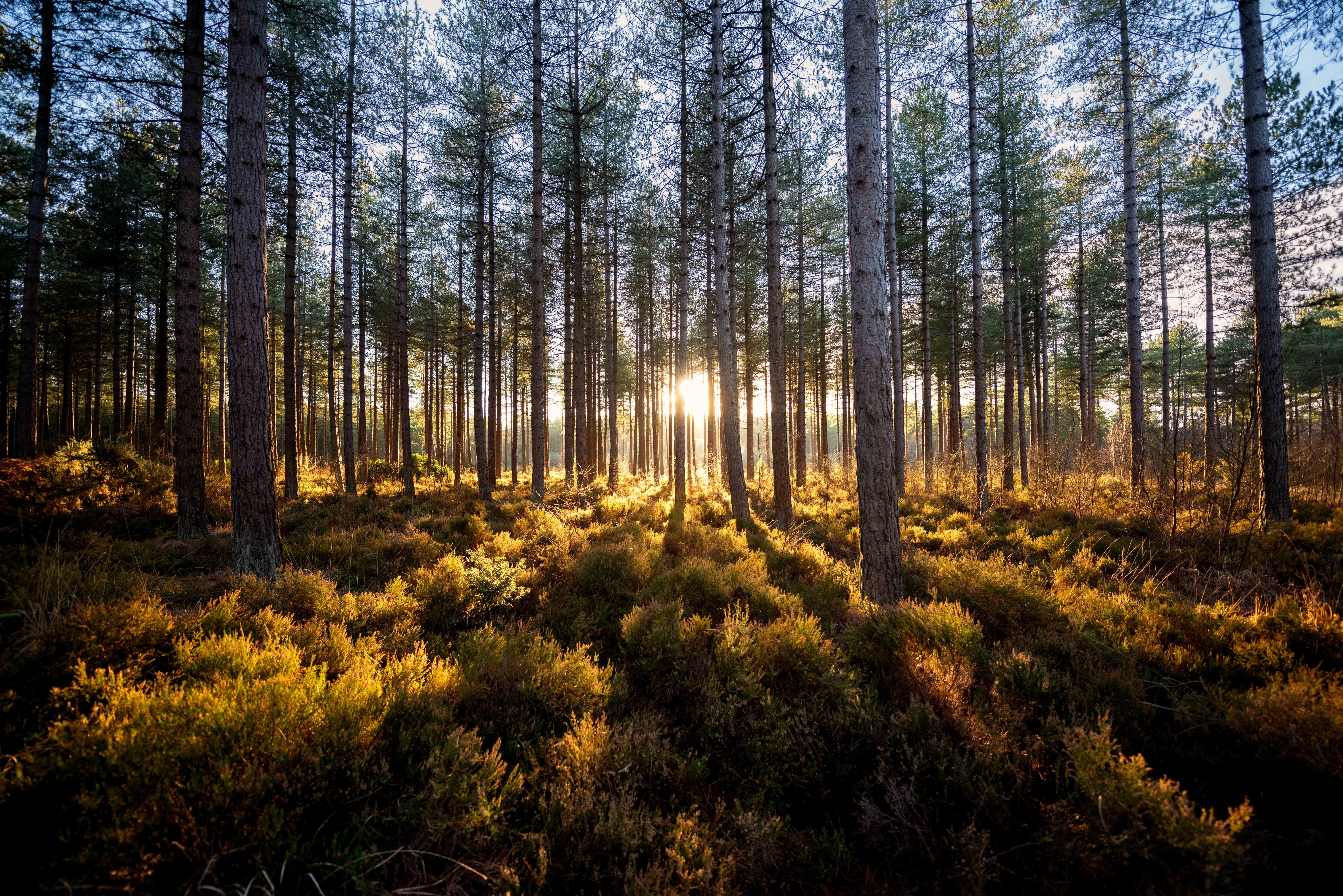 Photo of Hurn Forest