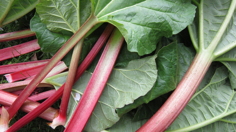 Rhubarb-Header.jpg