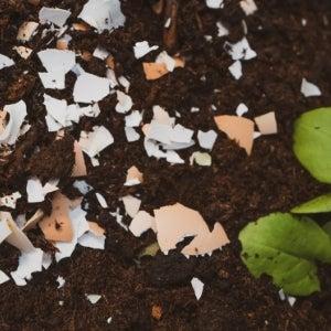 egg shells in soil