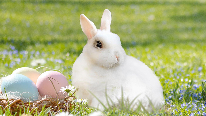 Easter_Header.jpg