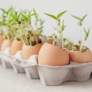 seedlings in egg shells