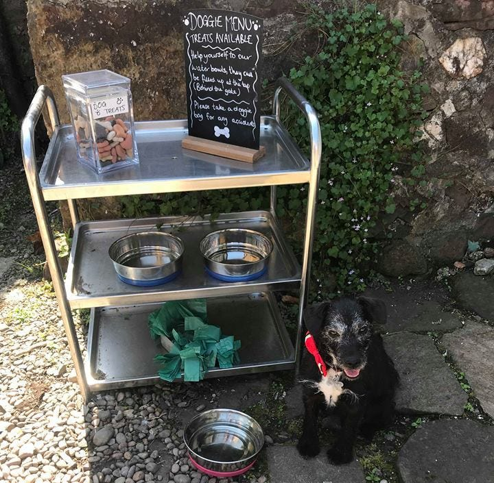 Small black dog sat by silver water bowl and tray of doggie treats