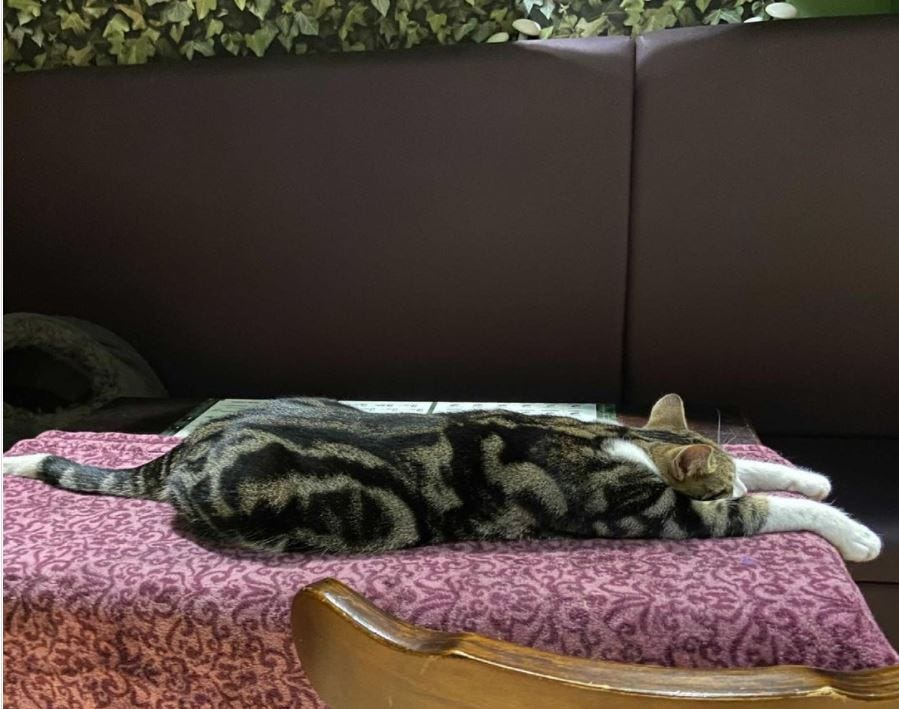 Cat stretched out on table at Lady Dinah's Cat Emporium