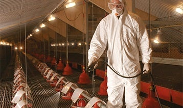 Cleaning and disinfection in poultry houses
