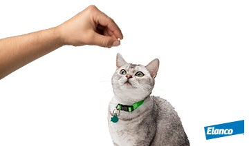 Ticks and fleas in cats social media awareness posts for pet owners