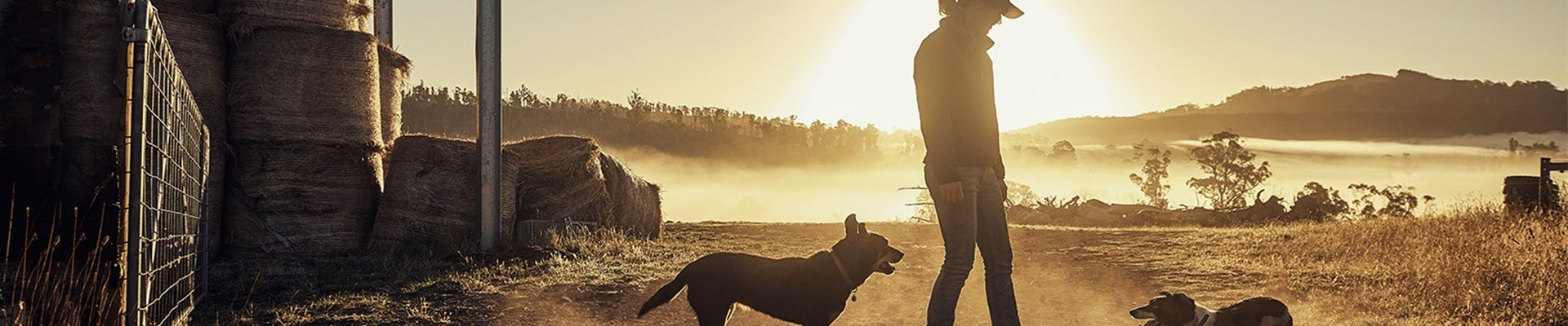 Dog Sunset Hero Banner 1920x400