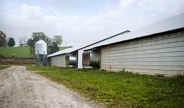 Outside view of a poultry shed