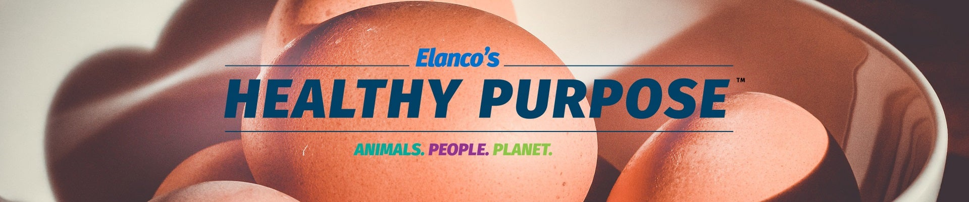 Healthy purpose header