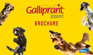 galliprant-brochure