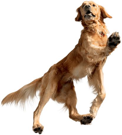 treat-closing-dog