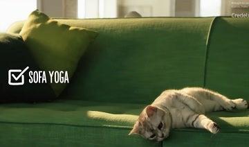Credelio cat sofa yoga