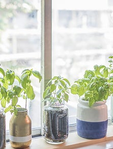 The great indoors: how to grow your own anywhere