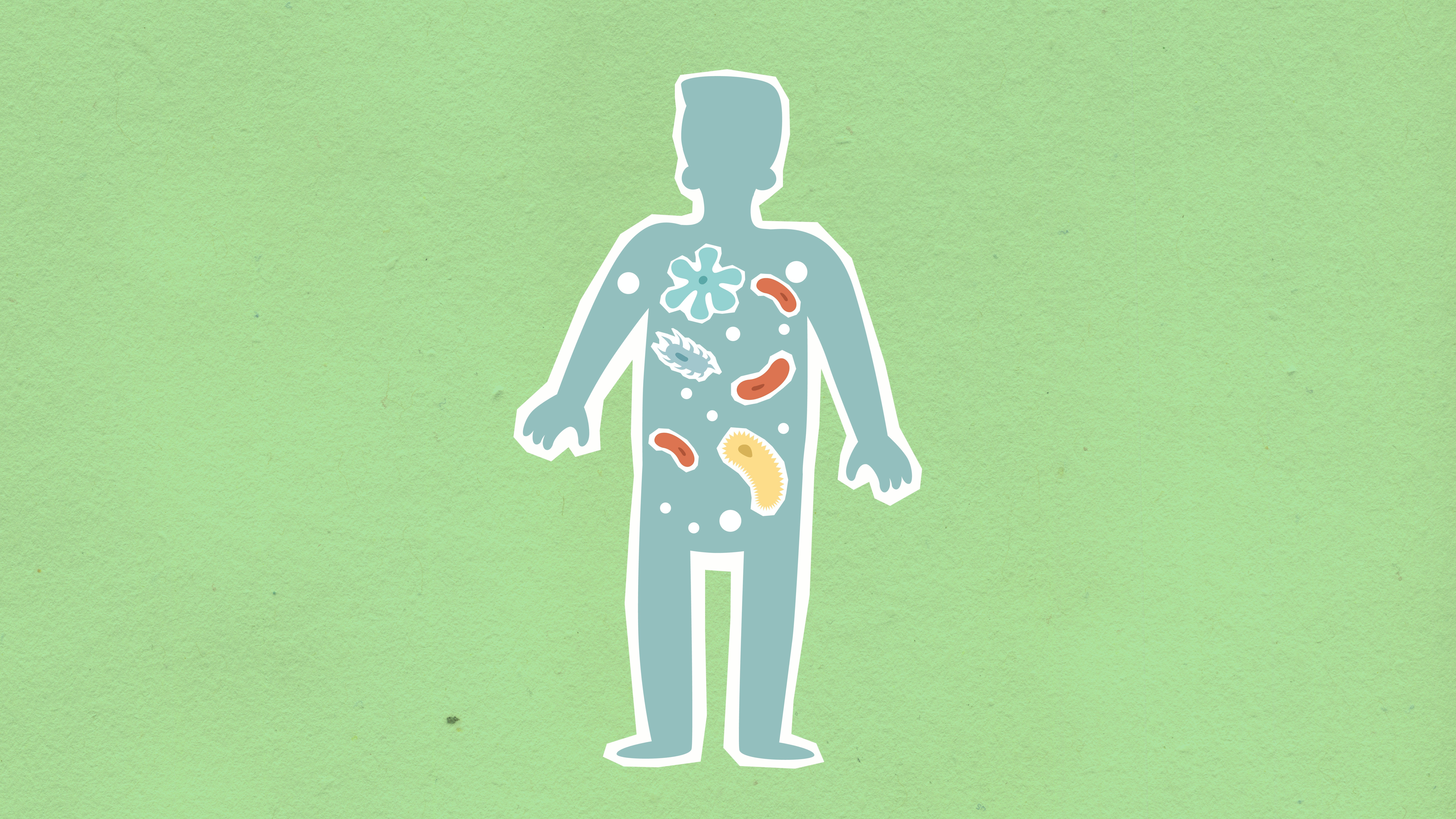 An illustration of bacteria inside the human body