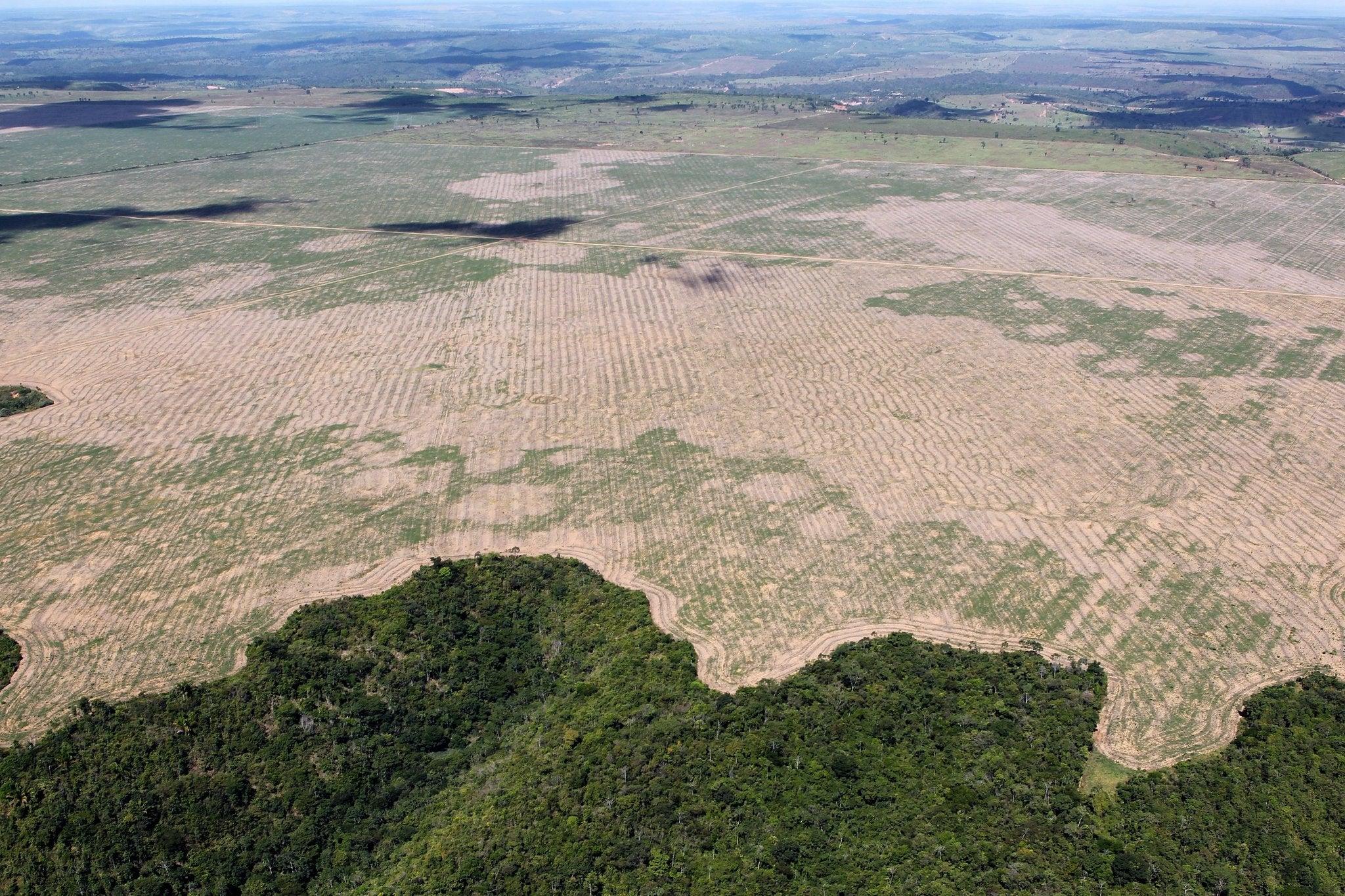 Deforestation in Maranhao, Brazil, bird's eye view