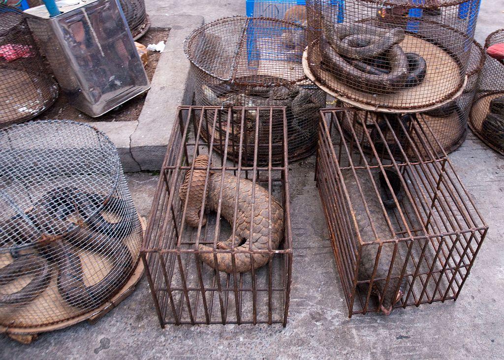 Myanmar Illicit Endangered Wildlife market. Photograph by Dan Bennett