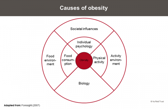 A diagram describing the causes of obesity.