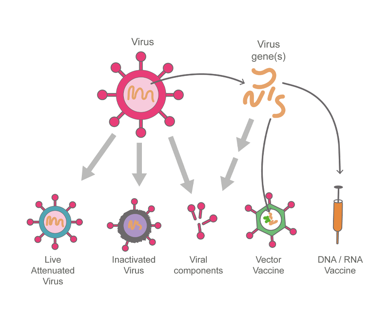 Five different strategies for producing an anti-viral vaccine.