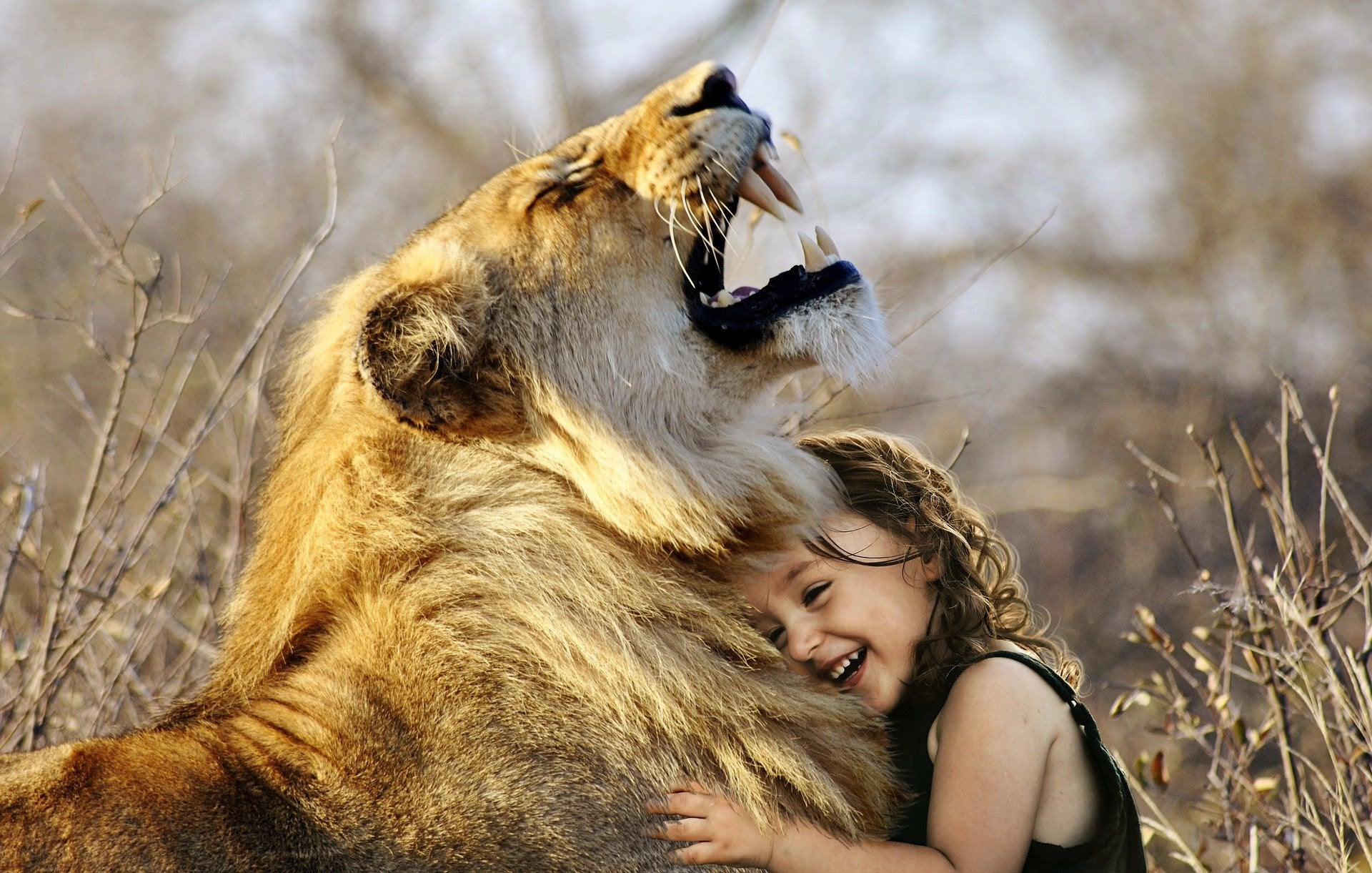 A digitally manipulated image of a girl hugging a lion