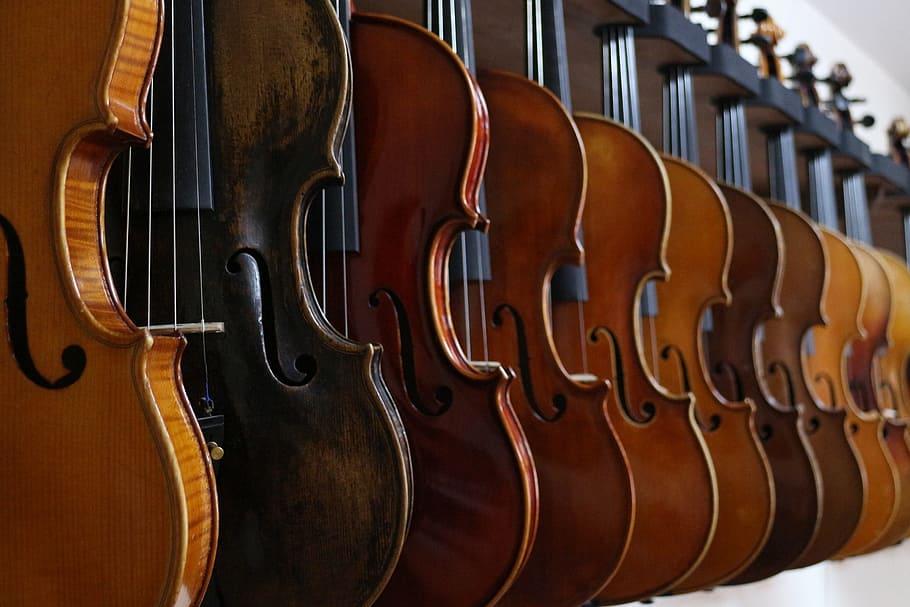 A row of violins on display