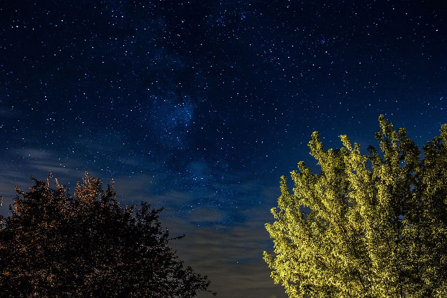 Photo of a starry sky with trees illuminated in the foreground
