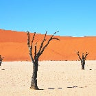A photo of a desert landscape, with leafless trees visible