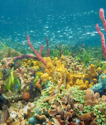 Blue Planet Live - Coral