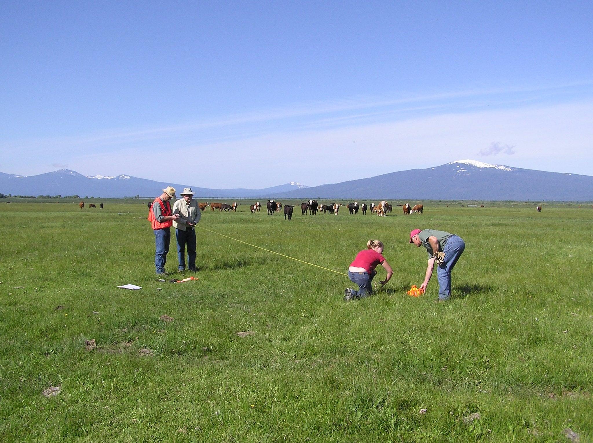 A vegetation survey in Wood River Valley, Oregon