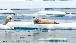 A polar bear stalks a seal - a scene from the BBC series The Hunt