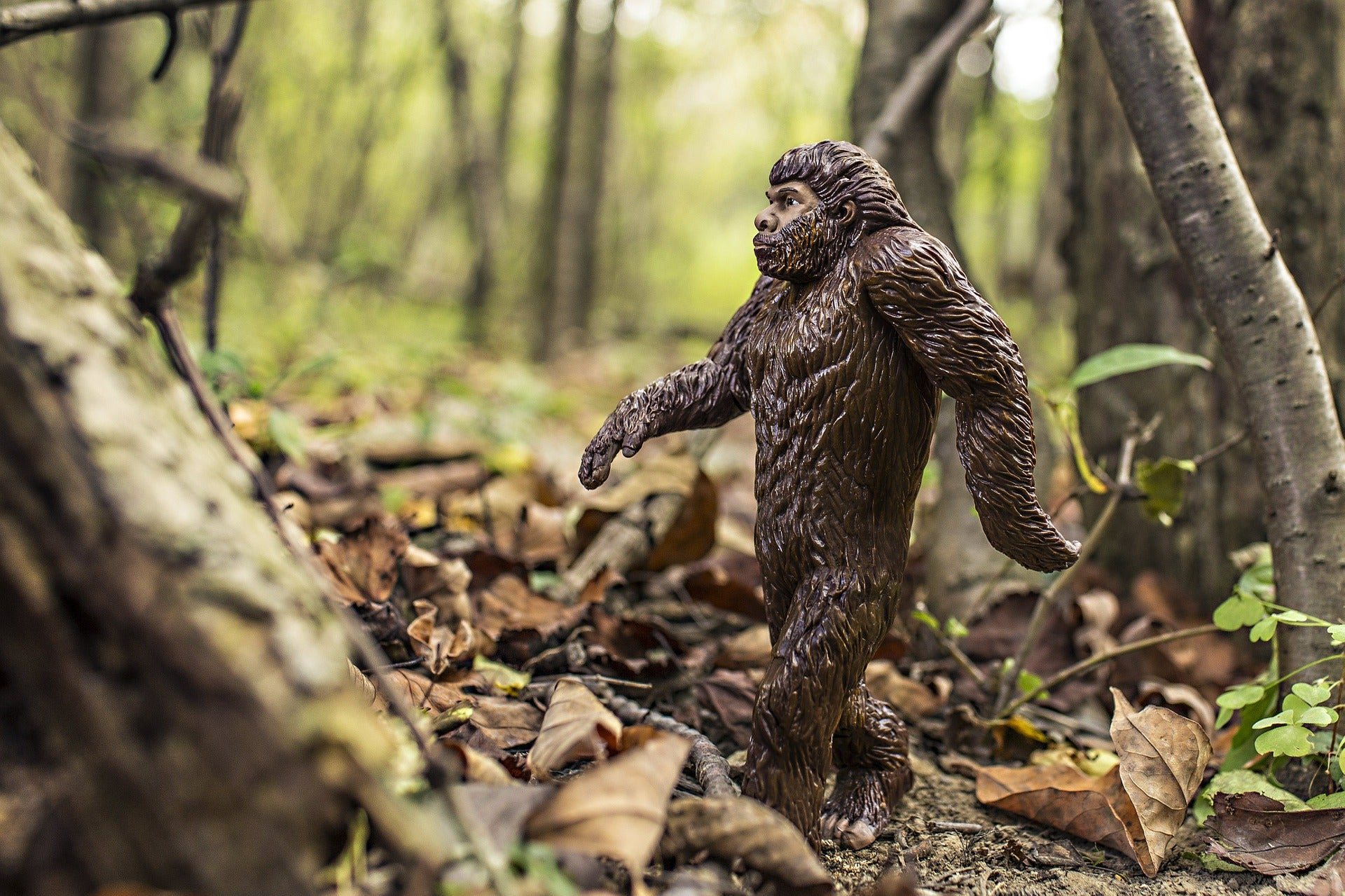 Toy bigfoot in a forest