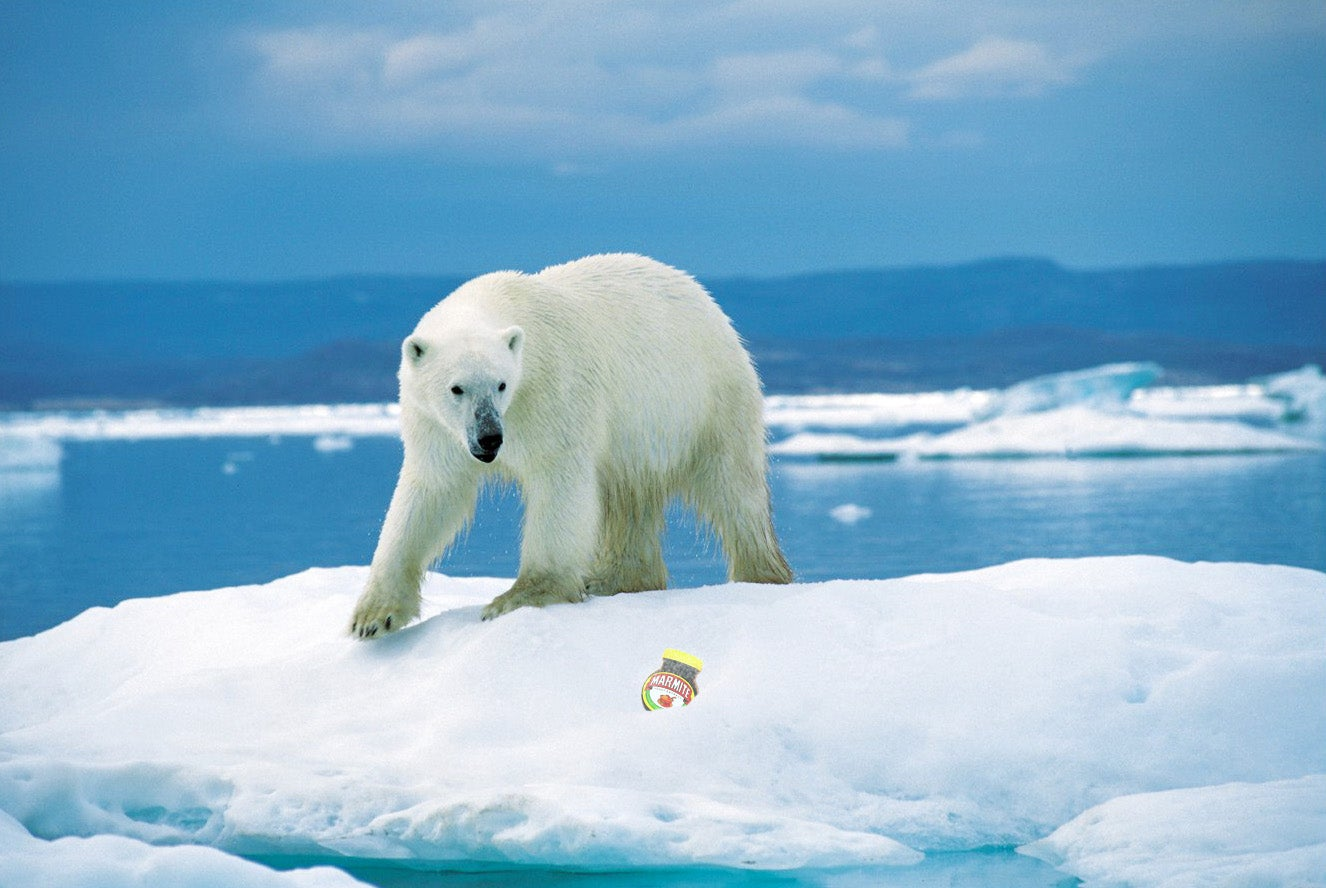 A Polar Bear looking at Marmite