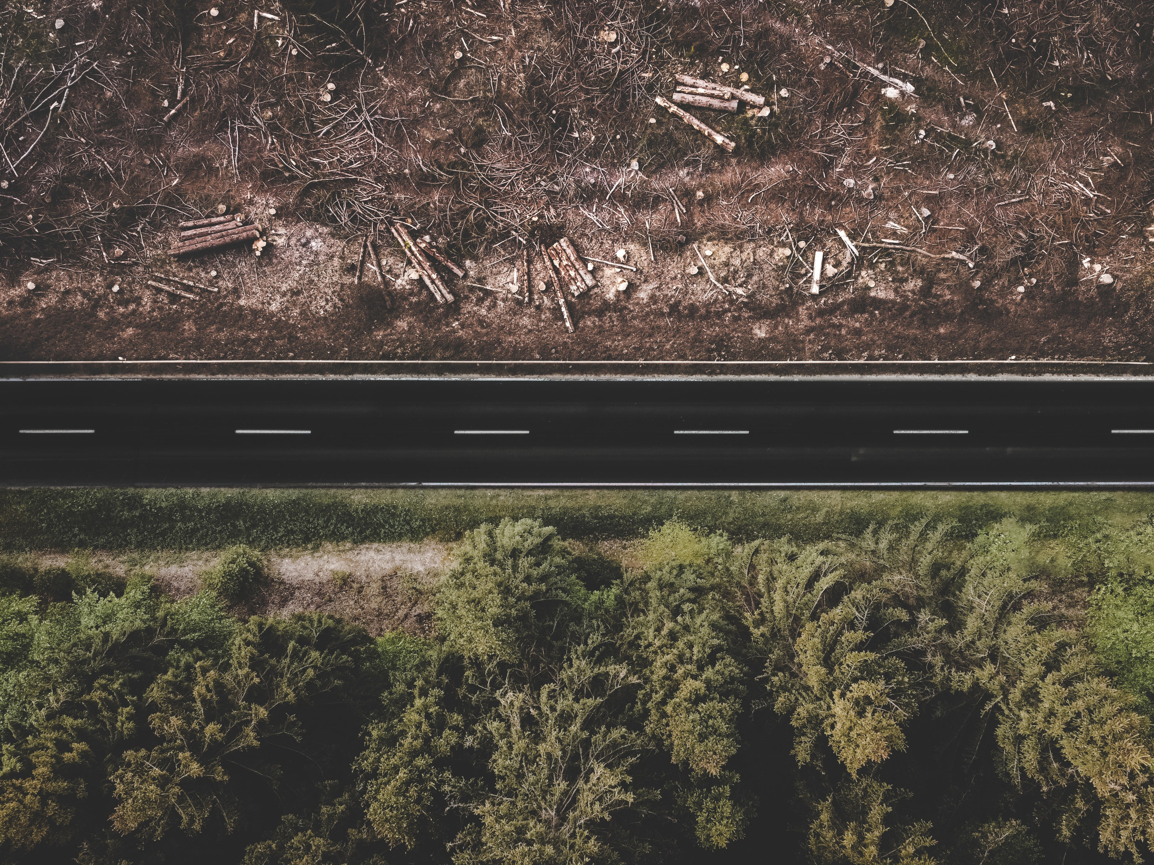 An area of deforestation and a healthy forest separated by a road.