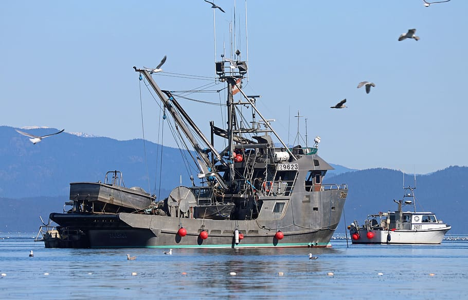 A large  grey fishing vessel sits on the water while seagulls fly overhead