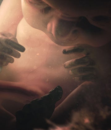 A fetus in the womb, from the BBC series Countdown to Life