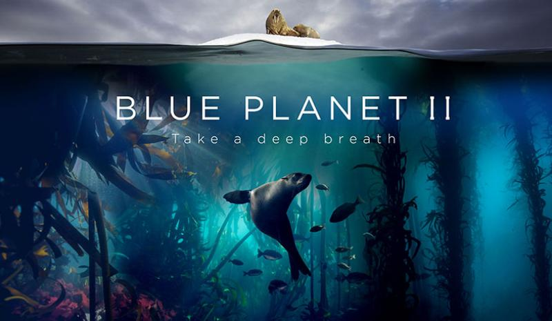 Thetitle screen for Blue Planet 2. It simultaneously shows a seal mid-swim in a lush underwater environment, with small fish in the background and, above this, what appears to be a walrus, sat on a floating block of ice