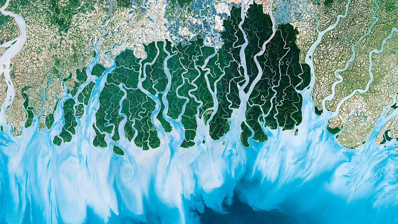 Amazon delta from space