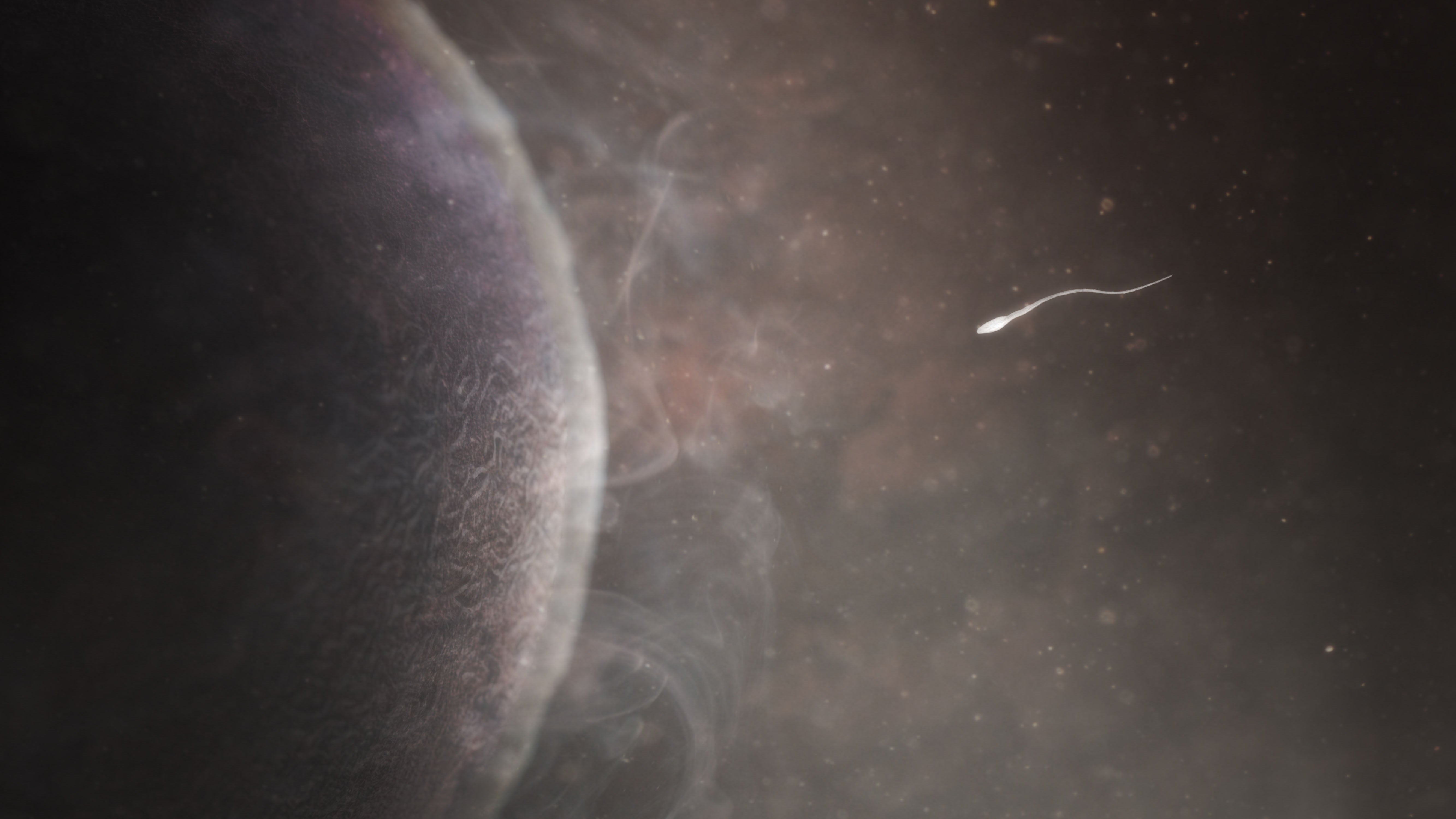 A sperm swims towards an egg, from the BBC series Countdown to life