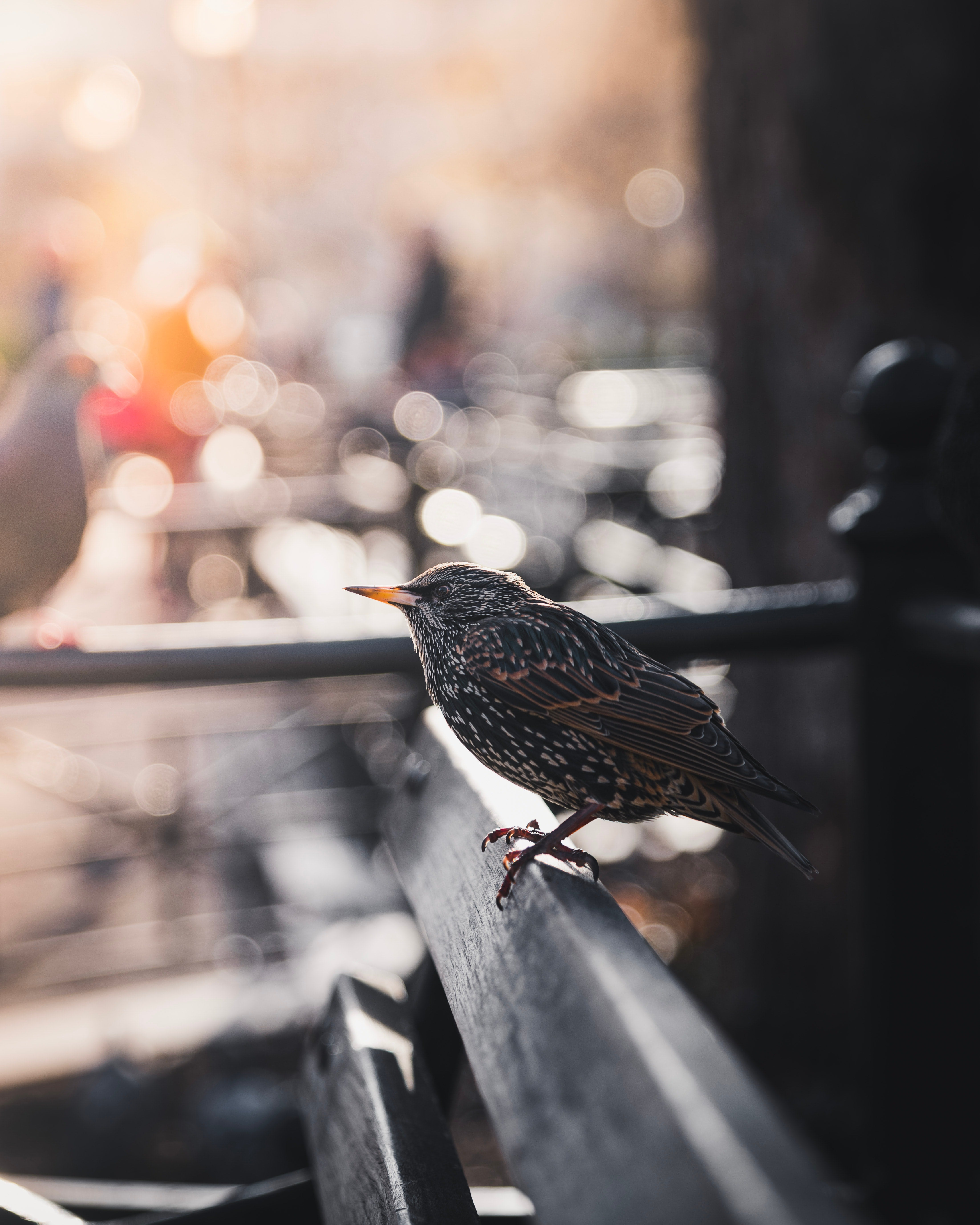 An urban starling looks out over the city