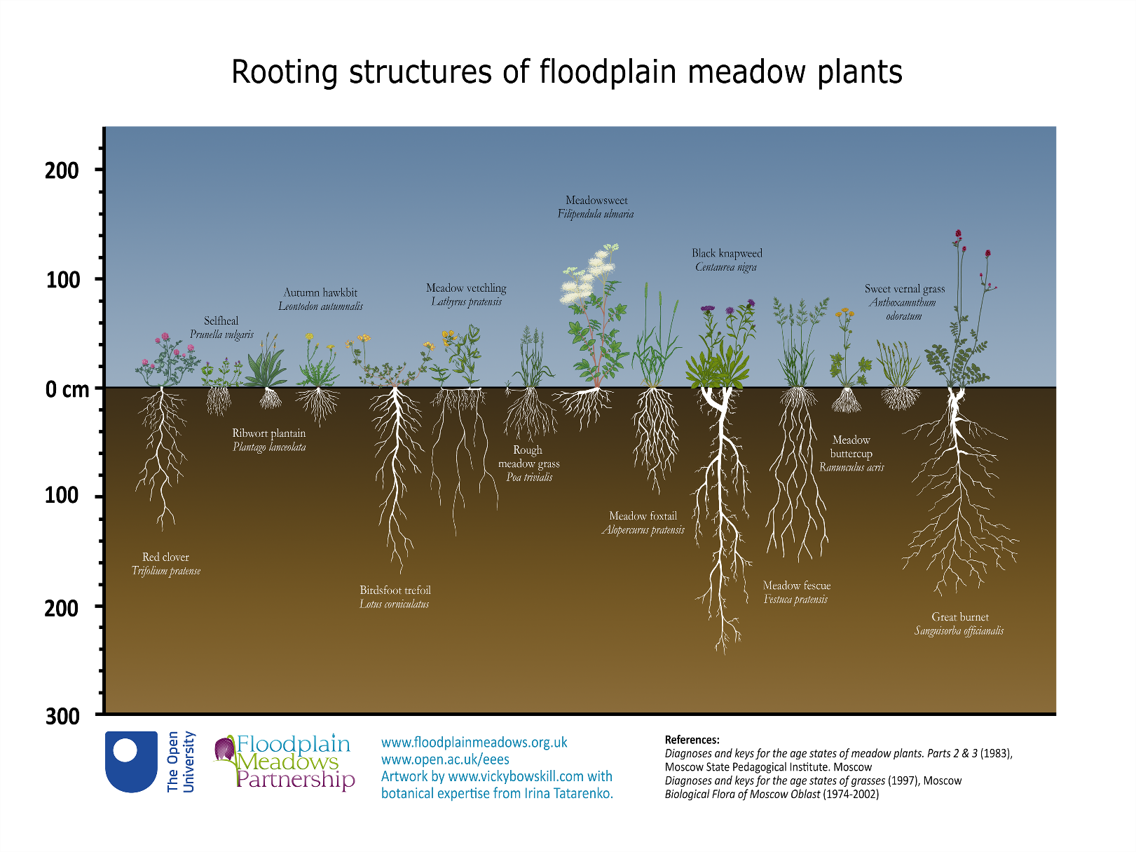 A diagram showing the rooting structures of floodplain meadow plants