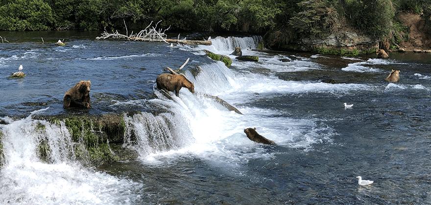 Aljaška - fauna