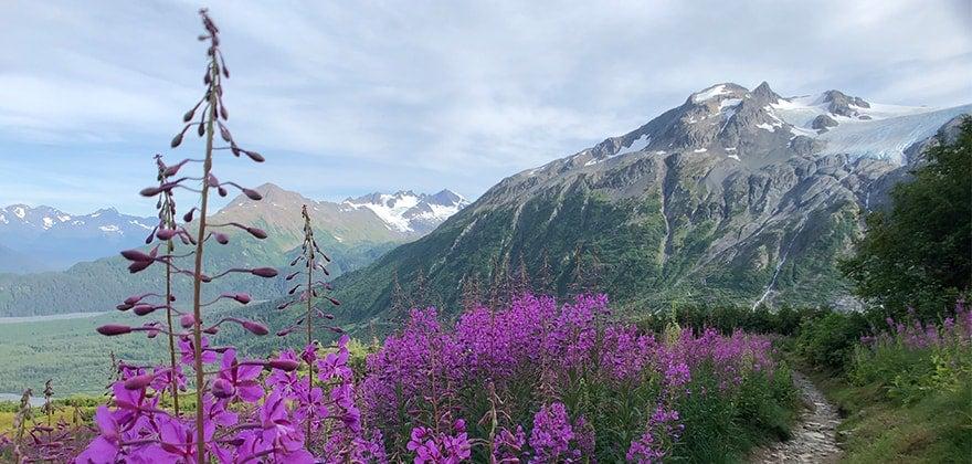 Aljaška - flóra