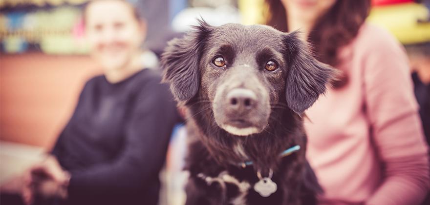 Pes Charlie, kterého si Martina před pár lety adoptovala z útulku, je dneska nedílnou součástí marketingové kanceláře.