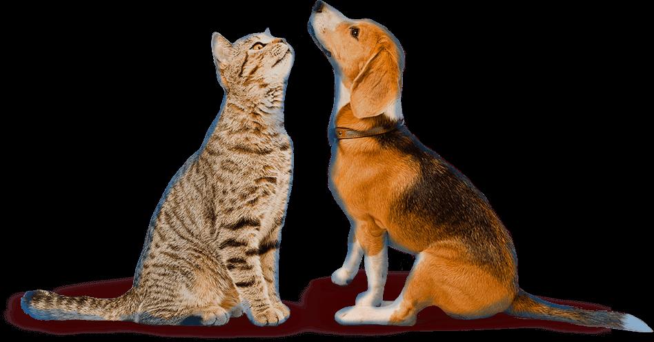 Мильбемакс – лучшая защита от гельминтов для кошек и собак